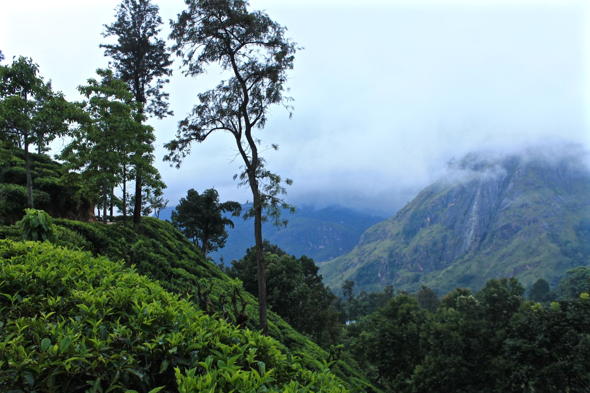 See Sri Lanka in 2 Weeks - the Ideal Travel Itinerary